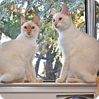 Adopt A Pet :: Feather and Quinn - Davis, CA