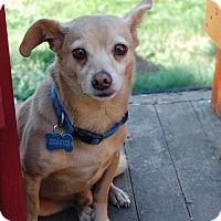 Adopt A Pet :: Carl - Salem, OR