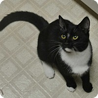 Adopt A Pet :: Smudge - Encinitas, CA