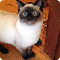 Adopt A Pet :: Simon & Georgia - Roseville, MN