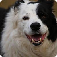 Adopt A Pet :: Jax - Highland, IL