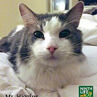 Adopt A Pet :: Mr. Higgins - Oakville, ON
