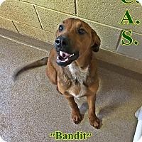 Adopt A Pet :: 1-10 Bandit - Triadelphia, WV