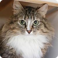 Adopt A Pet :: Annie Oakley - Boise, ID