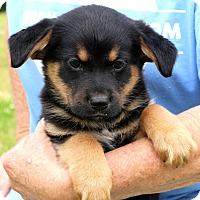 Adopt A Pet :: Mojo - Glastonbury, CT
