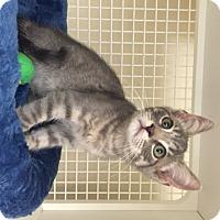 Adopt A Pet :: Dustin - San Antonio, TX