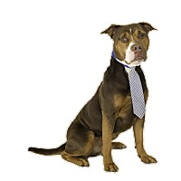 Adopt A Pet :: Lug Nut - St. Cloud, FL