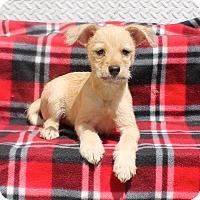 Adopt A Pet :: Cava - Los Angeles, CA
