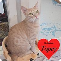 Adopt A Pet :: Nugget - San Leon, TX