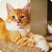 Adopt A Pet :: Aron 6 months old - Virginia Beach, VA