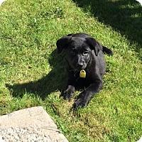 Adopt A Pet :: Spring - Saskatoon, SK