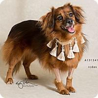Adopt A Pet :: Arlo - Sherman Oaks, CA