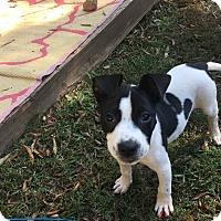 Adopt A Pet :: Matthew - Durham, NC