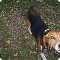 Adopt A Pet :: Lloyd - Baraboo, WI