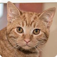Adopt A Pet :: Pumpkin - Prescott, AZ