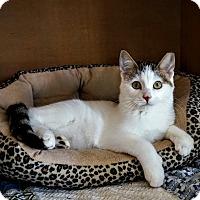Adopt A Pet :: Ra - Manitowoc, WI