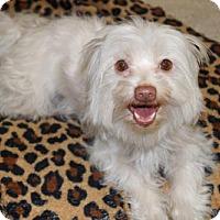 Adopt A Pet :: 'GERI' - Agoura Hills, CA