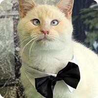 Adopt A Pet :: Firestorm - South Bend, IN
