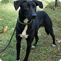 Adopt A Pet :: Aadi - Livingston, TX
