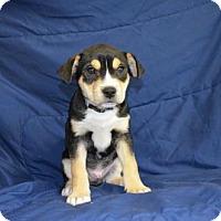 Adopt A Pet :: Nike - Yreka, CA
