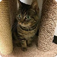 Adopt A Pet :: Miss Bea - Bensalem, PA
