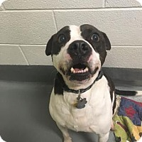 Adopt A Pet :: Buster Brown - Adrian, MI