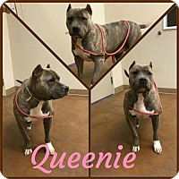 Adopt A Pet :: Queenie - Richmond, CA