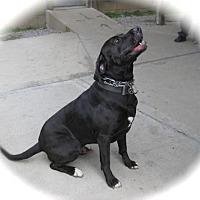 Adopt A Pet :: Cutter - Sparta, IL