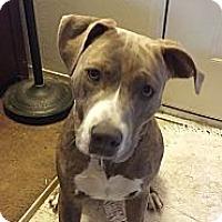 Adopt A Pet :: Riley - San Jose, CA