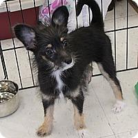 Adopt A Pet :: Costello - La Habra Heights, CA