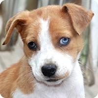 Adopt A Pet :: Biscuit-MEET HER! - Norwalk, CT