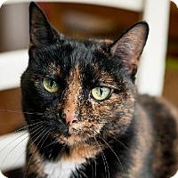 Adopt A Pet :: Bonnie - Oakville, ON