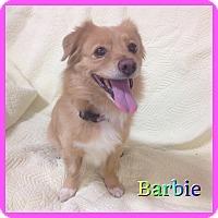 Adopt A Pet :: Barbie - Hollywood, FL