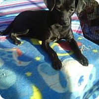 Adopt A Pet :: Tuuli - Surrey, BC