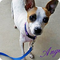 Adopt A Pet :: Angel - Huntsville, TN