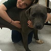 Adopt A Pet :: Charlotte - Berkeley Heights, NJ