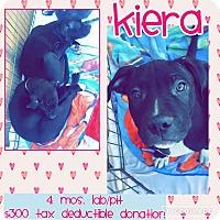 Adopt A Pet :: Kiera - Scottsdale, AZ