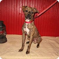 Adopt A Pet :: Stiltz - KANNAPOLIS, NC