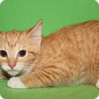 Adopt A Pet :: Kate (Mother Combo Tested) - Marietta, OH
