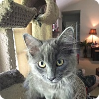 Adopt A Pet :: Whitney - Keller, TX