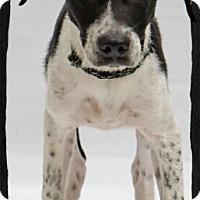 Adopt A Pet :: Brut - Old Saybrook, CT