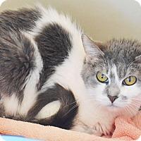 Adopt A Pet :: Rose Dawson - Lincoln, NE