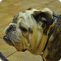 Adopt A Pet :: Finn - Odessa, FL