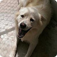 Adopt A Pet :: Grace - Lexington, TN