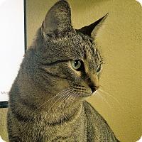 Adopt A Pet :: Milo - Sheboygan, WI