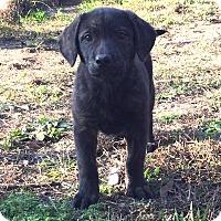 Adopt A Pet :: Terasa - Sagaponack, NY