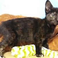 Adopt A Pet :: Victoria - Hallandale, FL