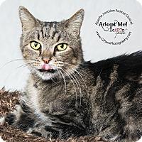 Adopt A Pet :: Tiger - Apache Junction, AZ