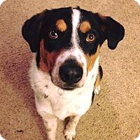 Adopt A Pet :: Spike - Laingsburg, MI