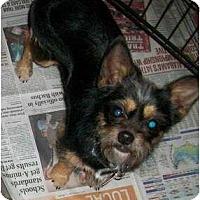 Adopt A Pet :: Noah - Richmond, VA
